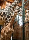 Infos aus dem Magdeburger Zoo